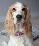 AMBER (was Daisy)