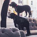 ARCHIE & BO